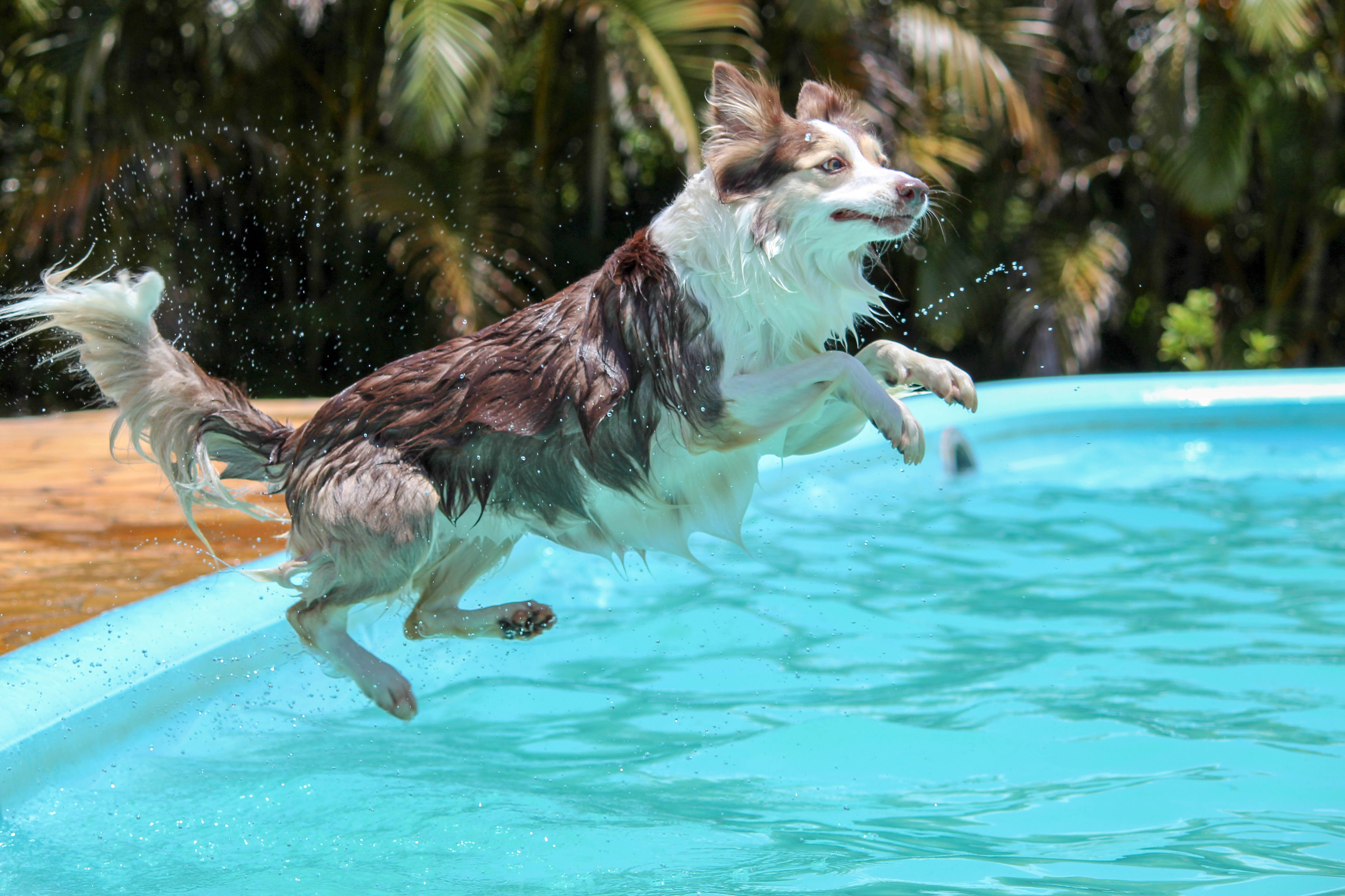 IEC makes a splash into social media.  Dog jumping into the pool.
