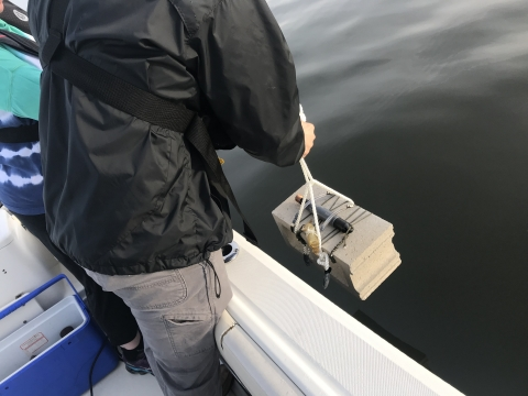IEC Staff deploying continuous monitoring data loggers in Little Neck Bay
